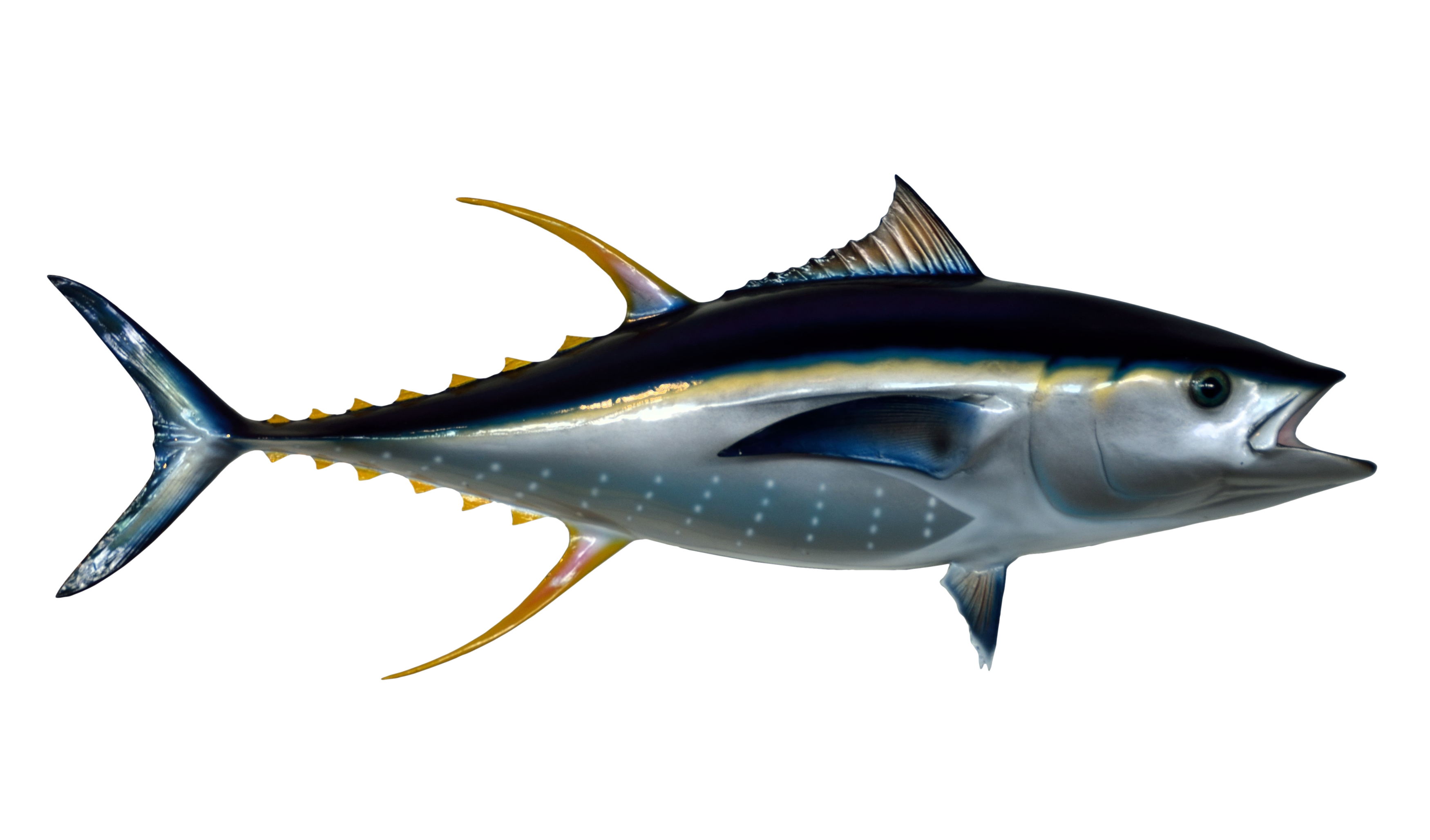 Tuna fish clipart clipart freeuse library Tuna Fish PNG Image - PurePNG | Free transparent CC0 PNG Image Library clipart freeuse library
