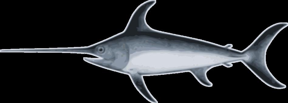 Blue marlin fish clipart svg freeuse Billfish Atlantic sailfish Atlantic blue marlin Marlin fishing ... svg freeuse