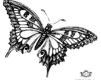 Blue morpho butterfly clipart black and white banner transparent Blue Morpho Butterfly, 3d Butterfly tattoo, WickedlyLovely skin art ... banner transparent