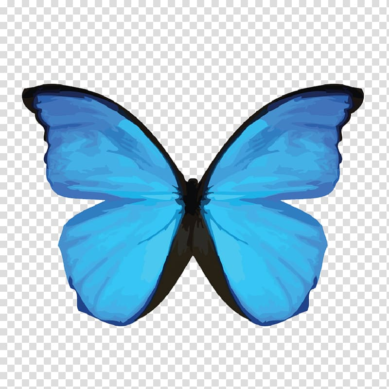 Blue morpho butterfly clipart black and white graphic royalty free library Menelaus blue morpho Morpho didius Insect Common blue morpho ... graphic royalty free library