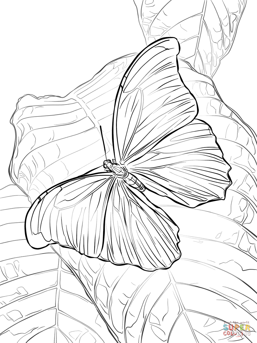 Blue morpho butterfly clipart black and white clip freeuse Giant Blue Morpho Butterfly coloring page | Free Printable Coloring ... clip freeuse
