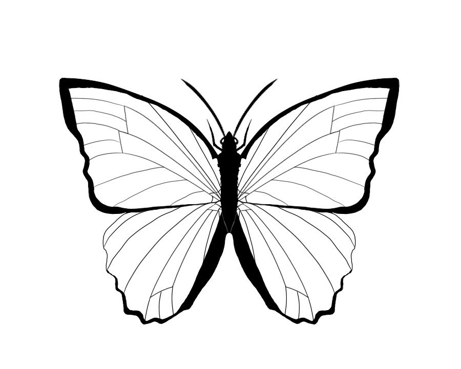 Blue morpho butterfly clipart black and white picture library download Butterfly Outlines | Free download best Butterfly Outlines on ... picture library download