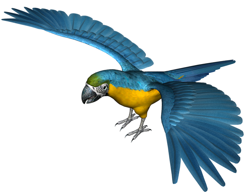 Blue parrot clipart freeuse Large Blue Parrot PNG Clipart   Gallery Yopriceville - High-Quality ... freeuse