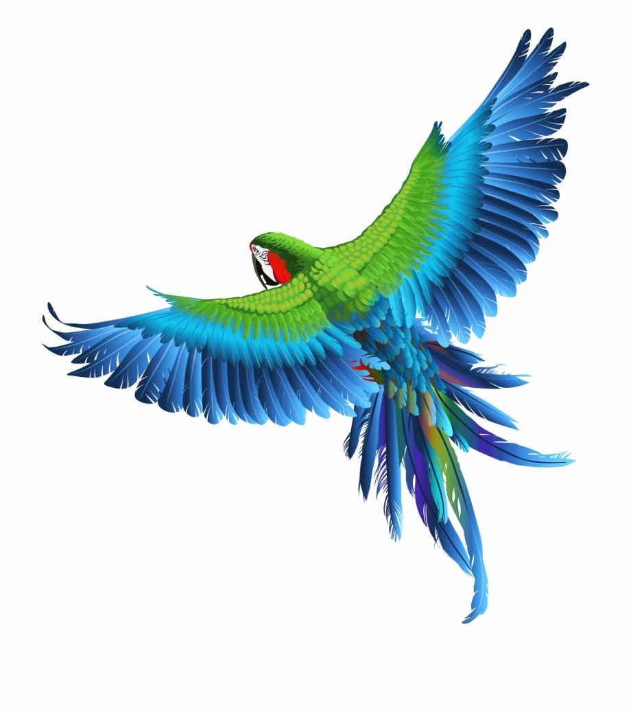 Blue parrot clipart clip art stock Transparent Parrot Clipart Picture - Transparent Parrot Clipart Free ... clip art stock