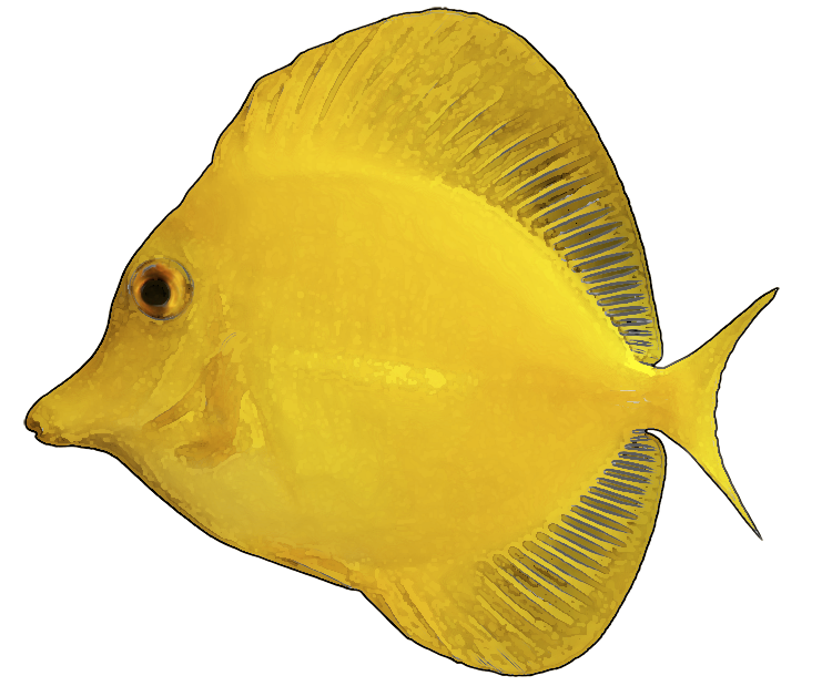 Yellow Fish Clip Art | Clipart Panda - Free Clipart Images image black and white library