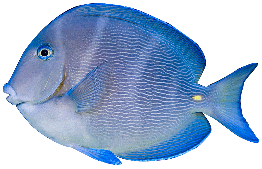 Tropical Aquarium Fish svg library