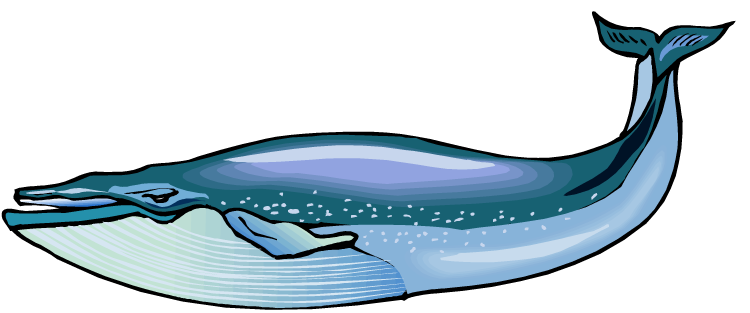 Blue whale clipart vector free Blue Whale Pictures | Clipart Panda - Free Clipart Images | tattoo ... vector free