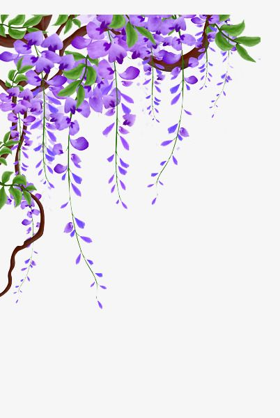 Very small vines of roses clipart lavender clip library stock Wisteria Vines Picture Material, Wisteria, Flower Vine, Flowers PNG ... clip library stock