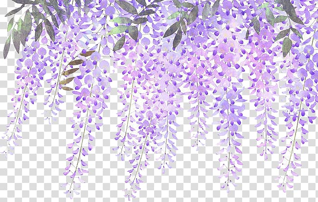 Blue wisteria clipart png library library Lavender Flower Purple Wisteria, Painted lavender wisteria flowers ... png library library