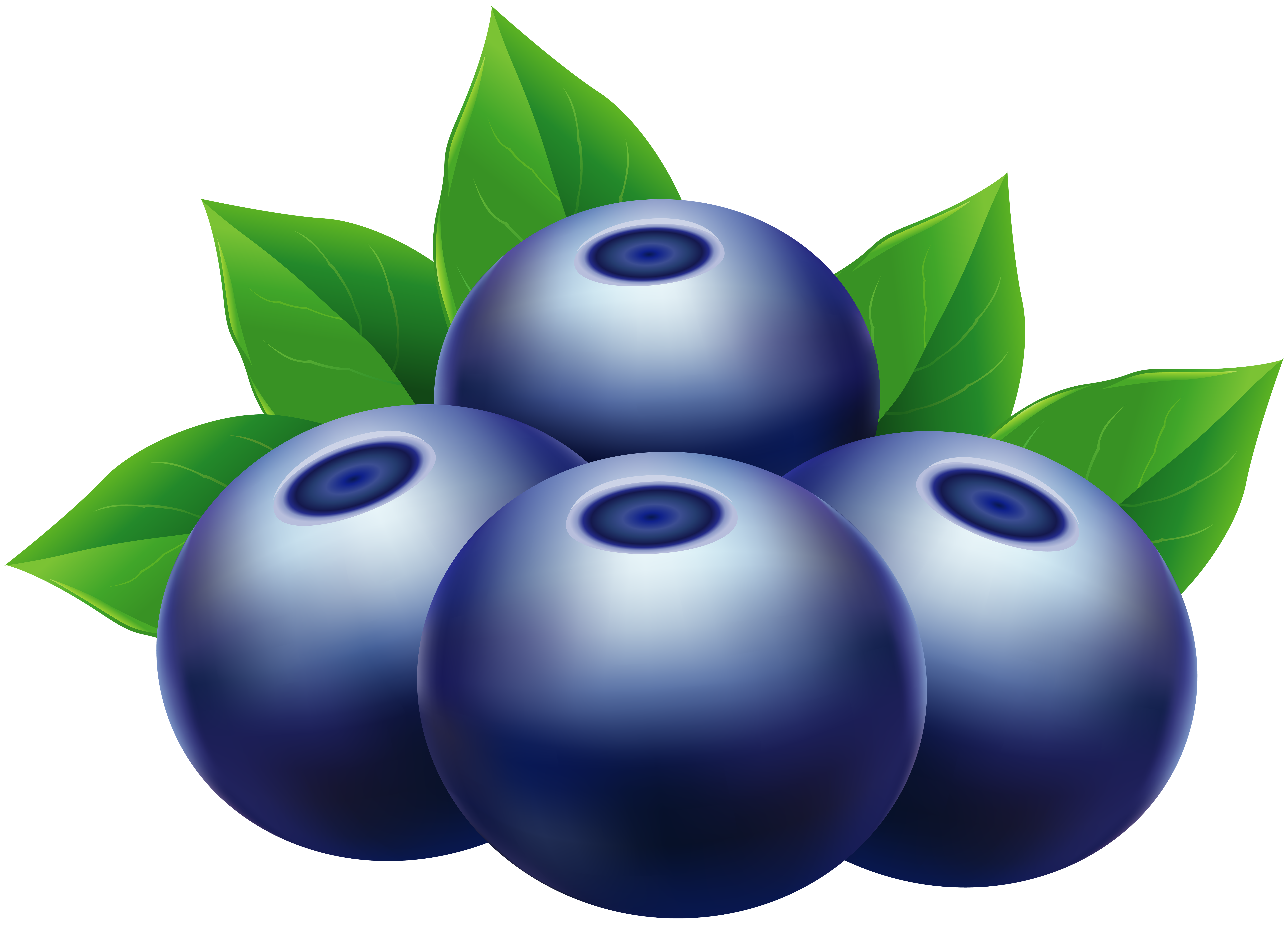 Blueberry images clipart graphic free download Blueberries PNG Clip Art Image   Gallery Yopriceville - High ... graphic free download