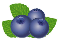 Blueberry images clipart clipart royalty free 44+ Blueberry Clipart   ClipartLook clipart royalty free