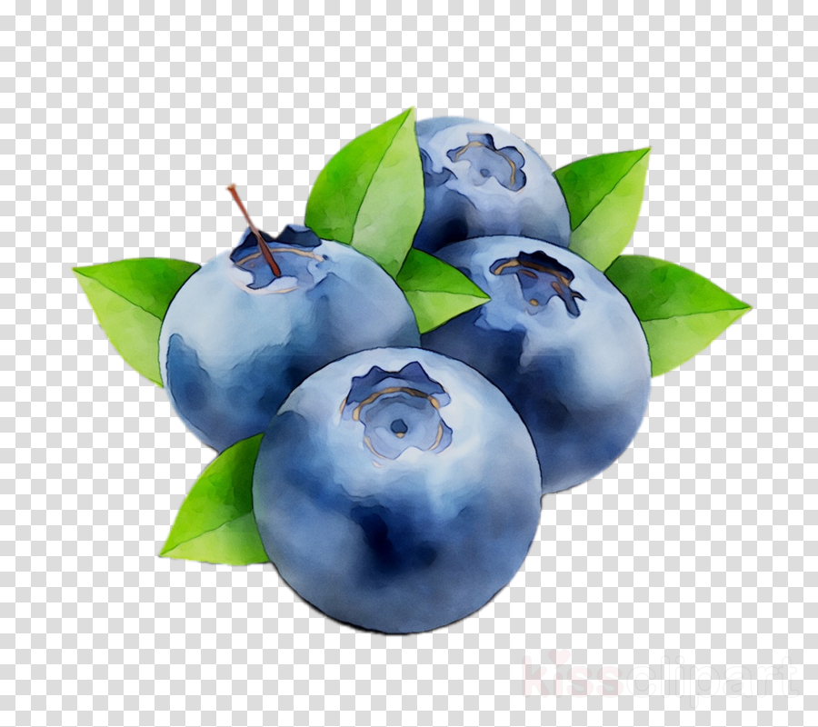 Blueberry images clipart banner royalty free stock Fruit Tree clipart - Blueberry, Fruit, Plant, transparent clip art banner royalty free stock