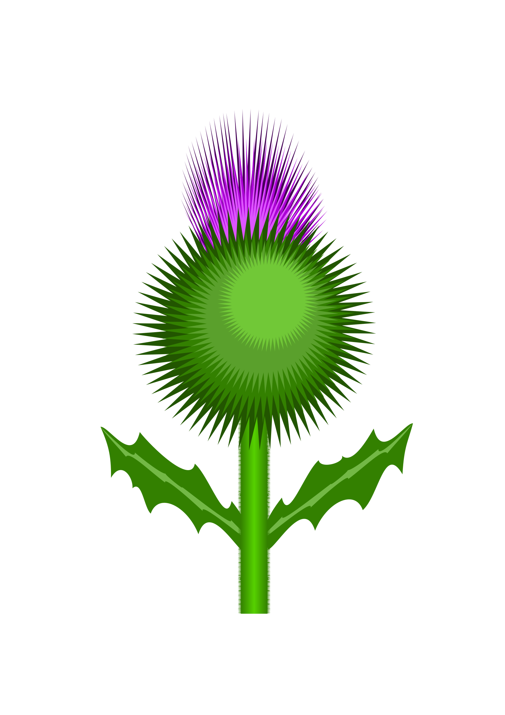 Scottish Thistle by @kevie, The flower of Scotland: the thistle, on ... png transparent download
