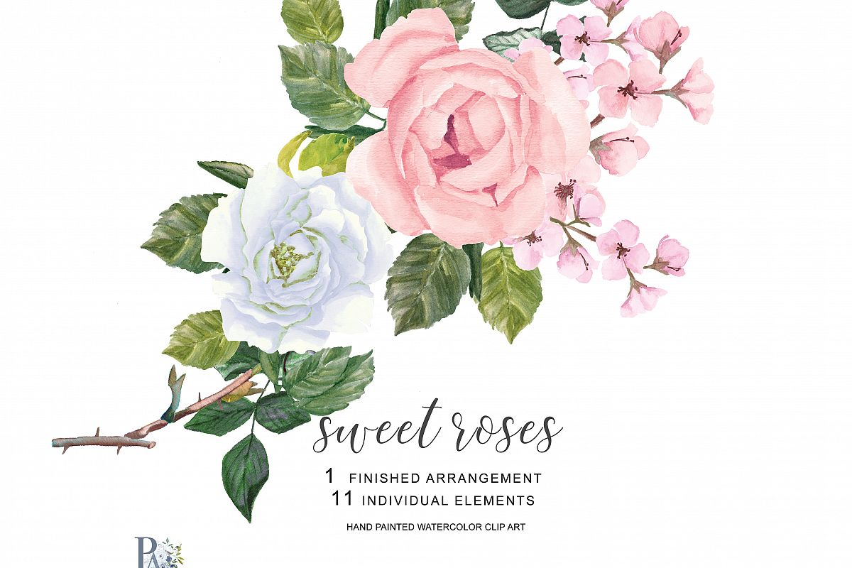 Hand painted watercolor clipart clipart black and white library Watercolor Blush Pink and White Roses Clipart Separate Elements Hand  Painted Pink & White Rose Clip Art clipart black and white library