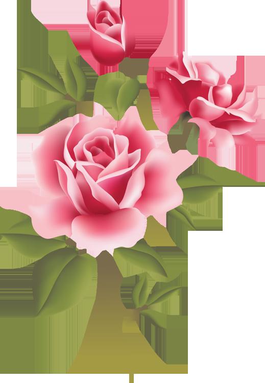 Web Design & Development | Pinterest | Pink roses, Rose and Wild ... royalty free stock