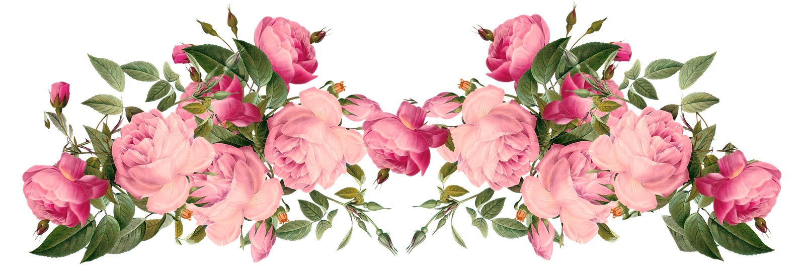Free vintage flower clipart banner royalty free download Pink Rose Borders | free pink | transparent floral images ... banner royalty free download
