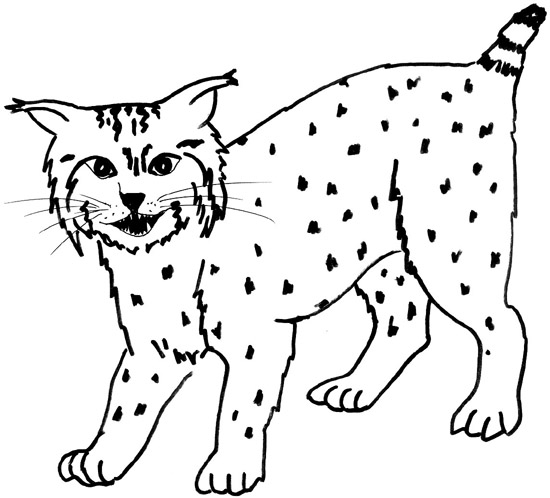 Bobcat clipart black and white clip transparent stock Free Simple Bobcat Cliparts, Download Free Clip Art, Free Clip Art ... clip transparent stock