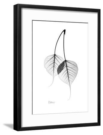 Bodhi day black and white clipart jpg free download Bodhi Tree Leaves in Black and White Art Print by Albert Koetsier | Art.com jpg free download