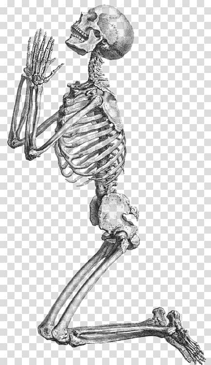 Body prayer clipart vector freeuse Skeleton illustration, Prayer Human skeleton Anatomy , Skeleton ... vector freeuse