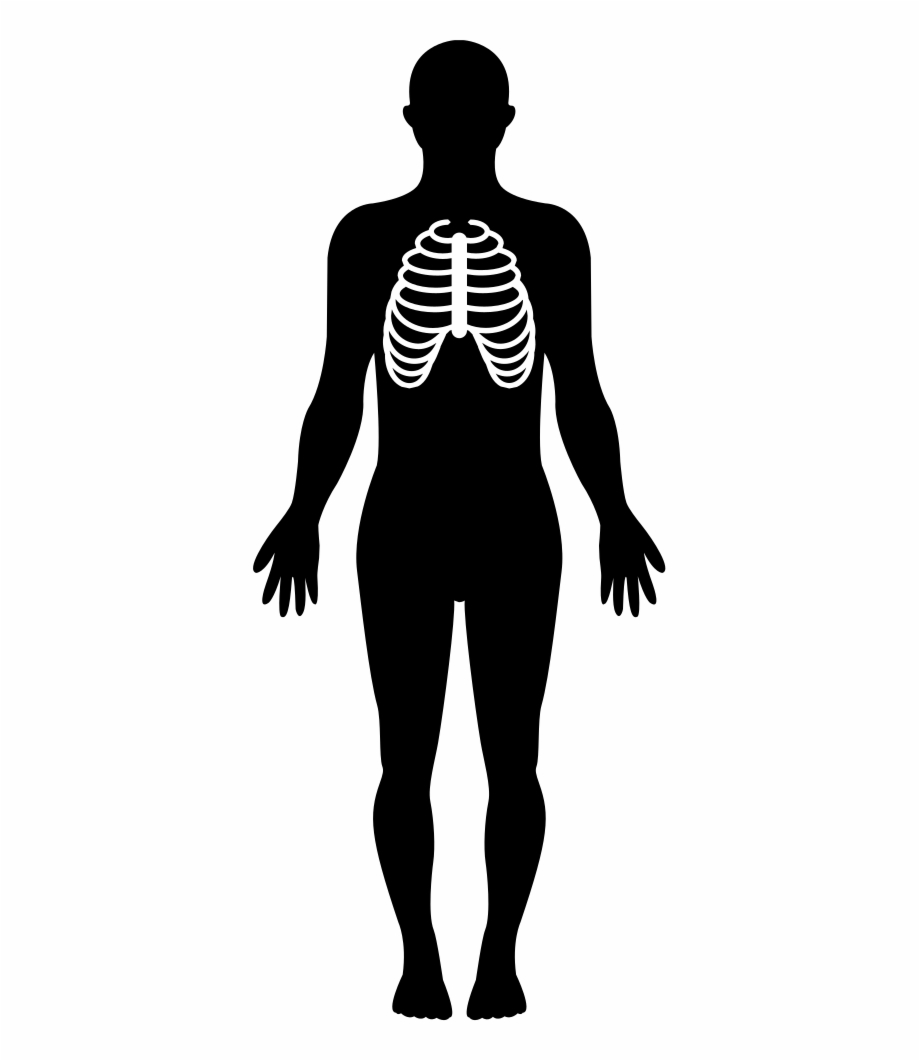 Body silhousette clipart freeuse stock Human Silhouette Png Transparent Background - Human Body Silhouette ... freeuse stock