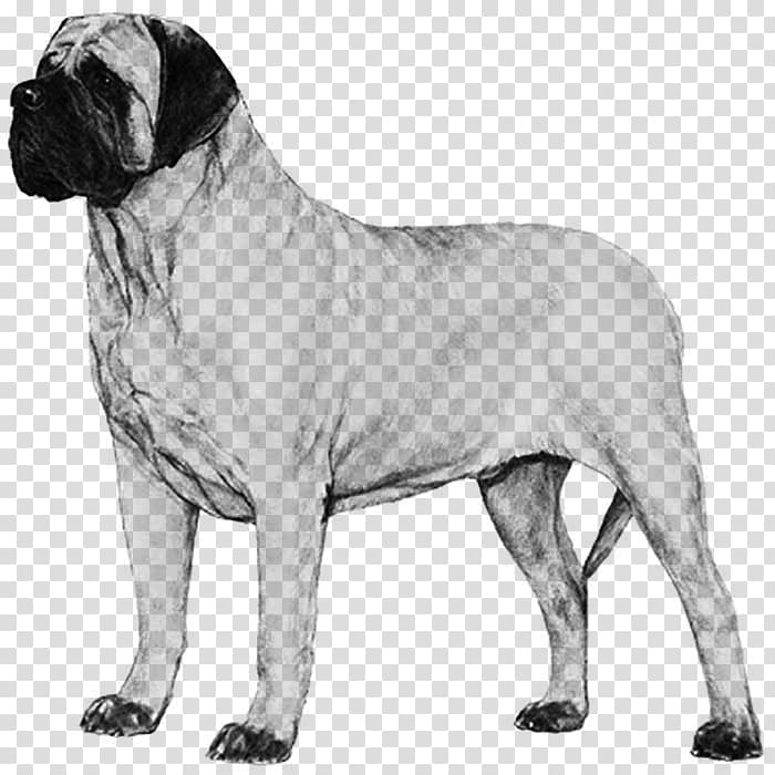 Boerboels clipart freeuse Dog breed Bullmastiff English Mastiff Boerboel Neapolitan Mastiff ... freeuse