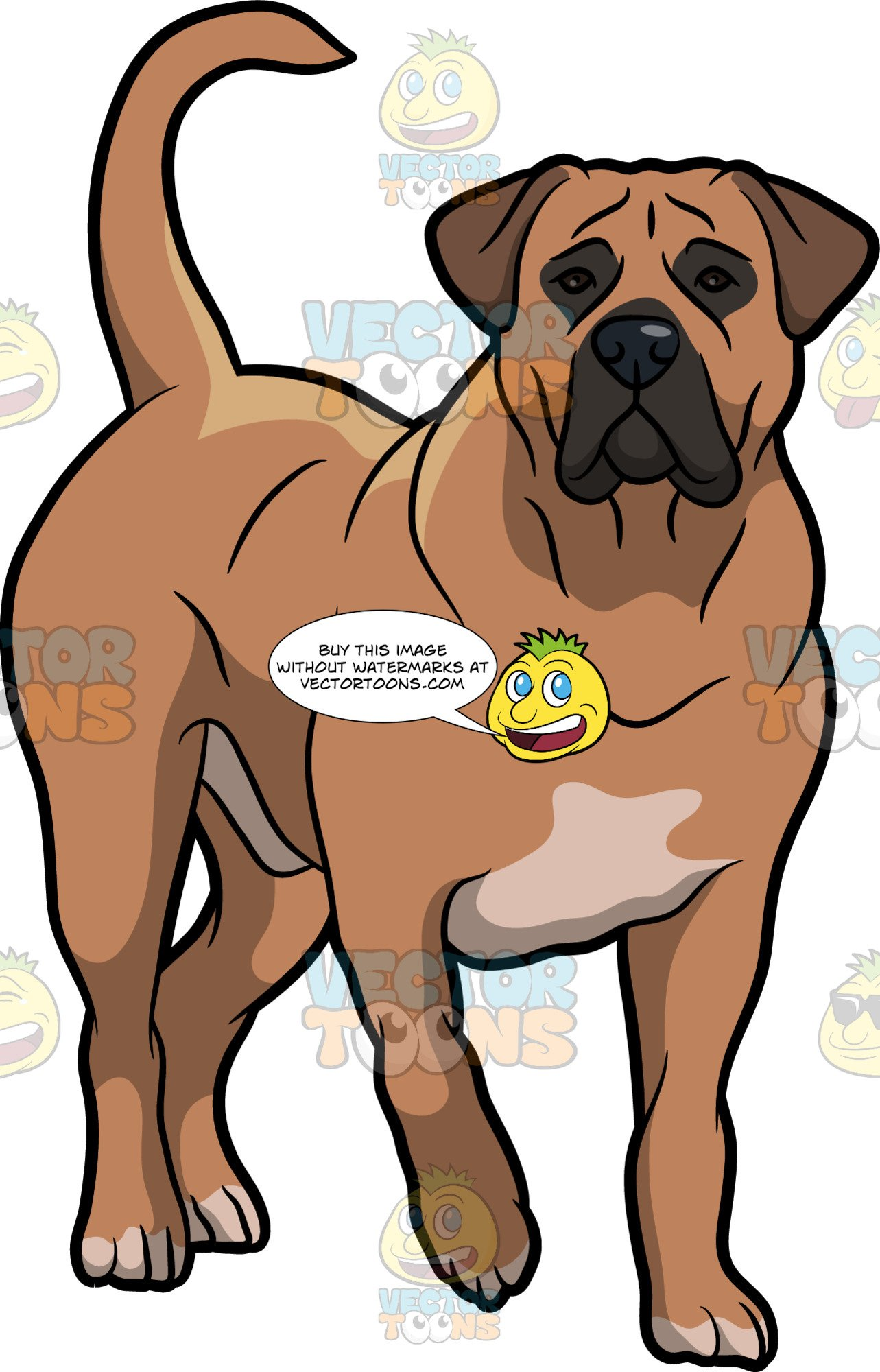 Boerboels clipart image transparent A Beautiful Boerboel Dog image transparent