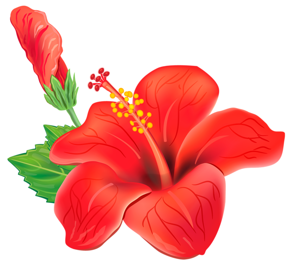 Tropical flower clipart free png royalty free library Red Exotic Flower PNG Clipart Picture | poroplast | Pinterest ... png royalty free library