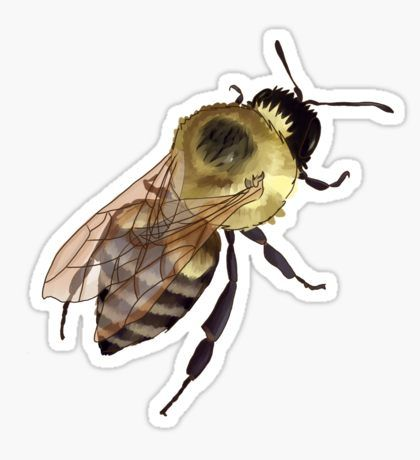 Bombus impatiens clipart svg transparent stock Bumblebee | Bombus impatiens Sticker bee, solitary bee, drawing ... svg transparent stock