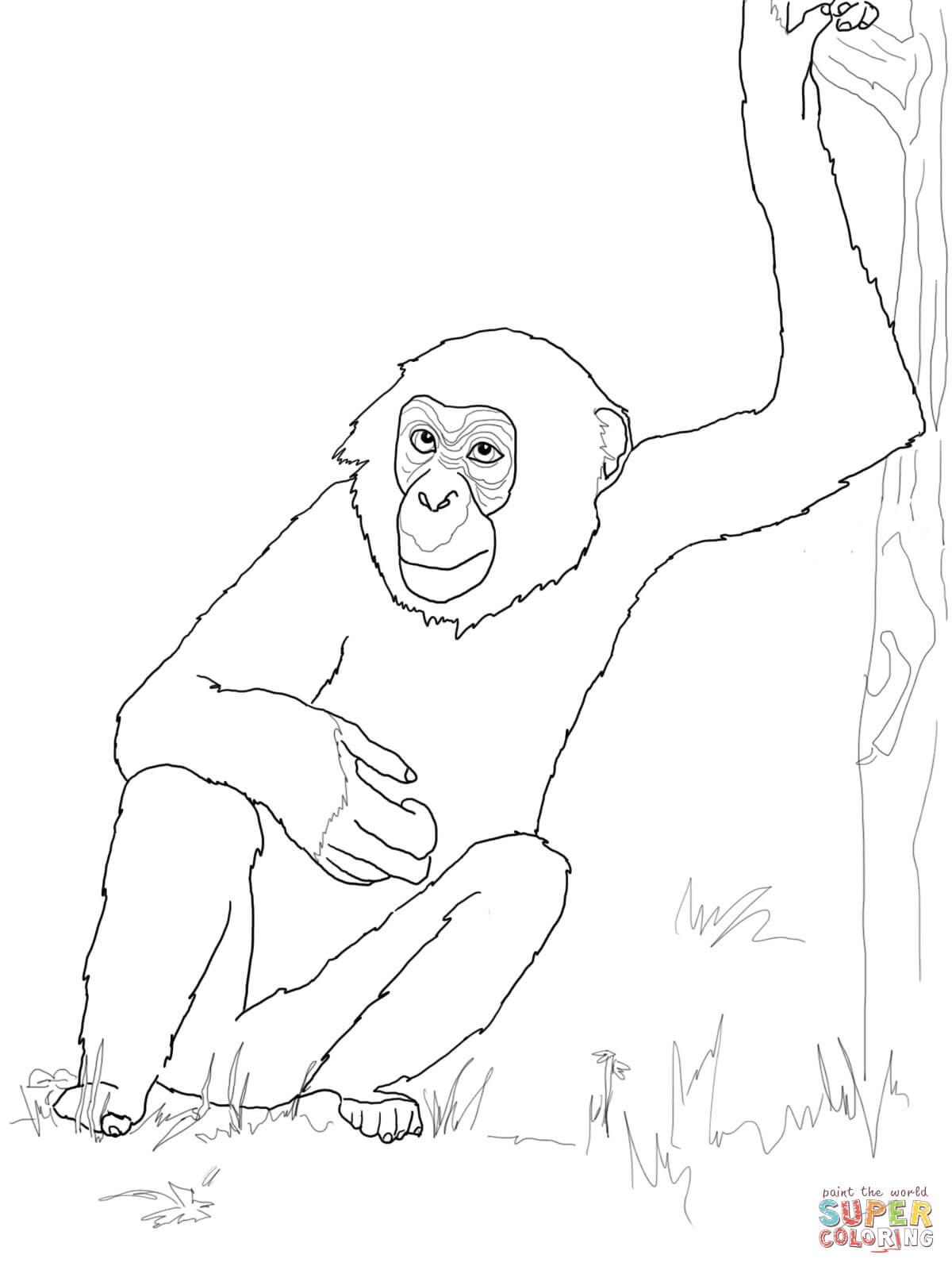 Bonobos clipart clip art library stock Bonobo Chimpanzee coloring page | Free Printable Coloring Pages ... clip art library stock