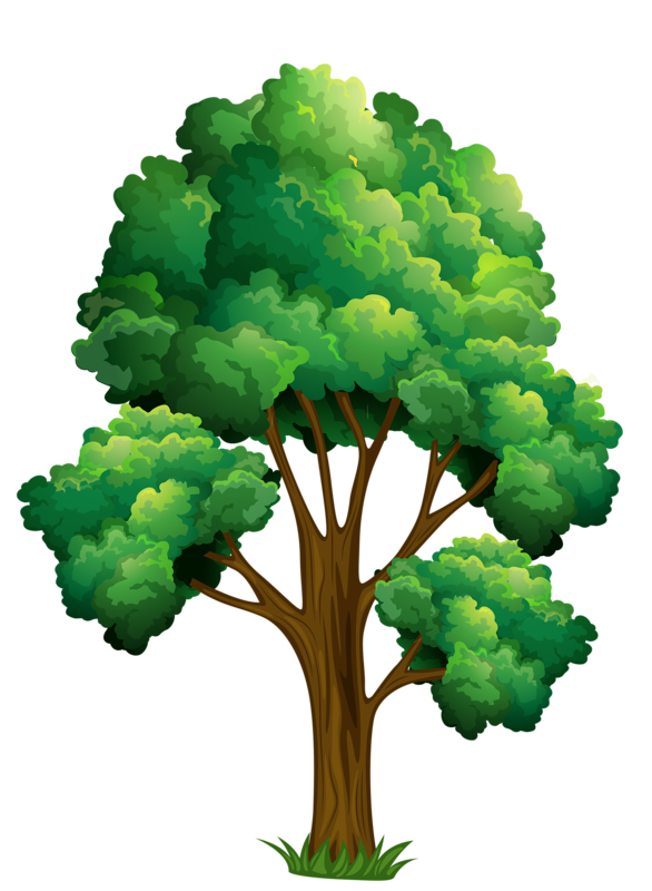 Elm tree clipart png library 24.png | Pinterest | Clip art, Tree leaves and Clip art pictures png library