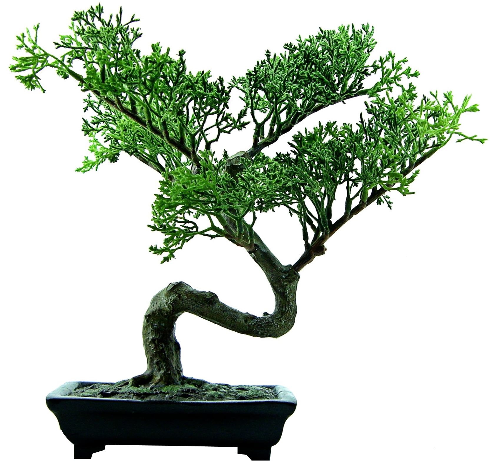 Bonsai tree clipart jpg free stock Bonsai Tree PNG Image - PurePNG | Free transparent CC0 PNG Image Library jpg free stock