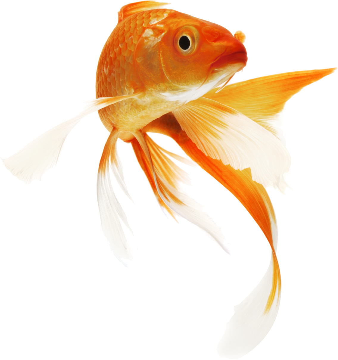 Clipart koi fish svg transparent library Fish Clipart Icon - 10497 - TransparentPNG svg transparent library