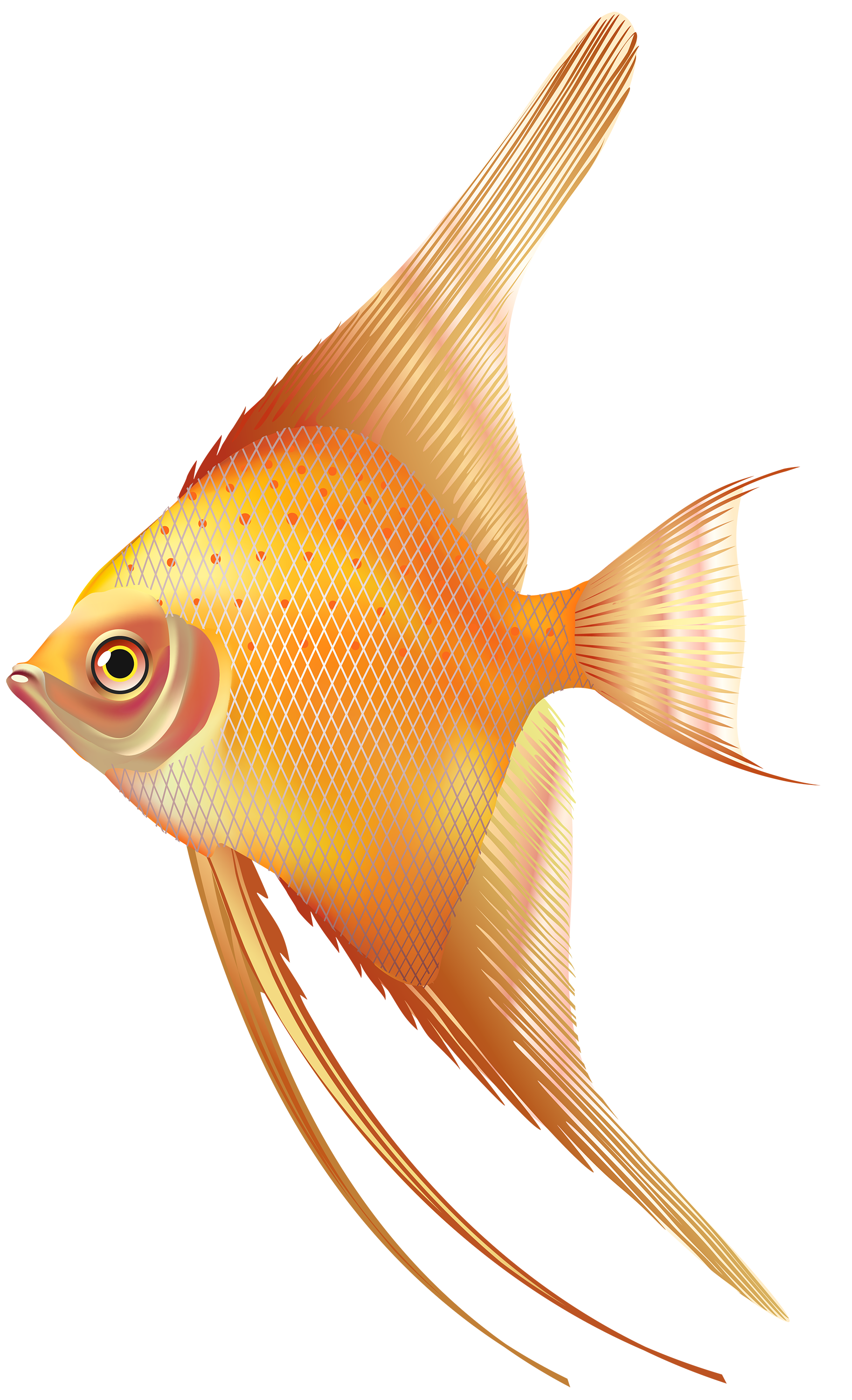 Nice Exotic Fish PNG Clipart - Best WEB Clipart clipart free library