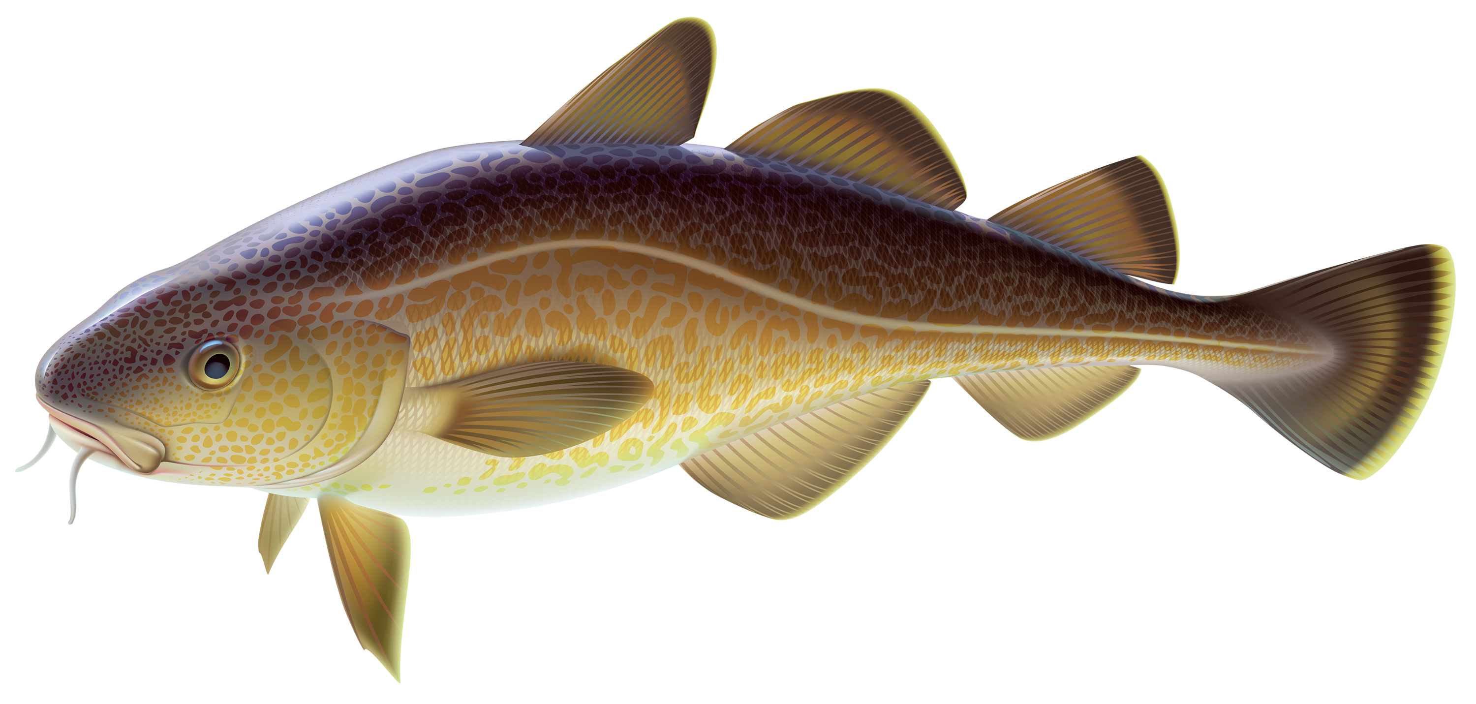 Wood fish clipart svg free library Carp Fish PNG Clipart - Best WEB Clipart svg free library