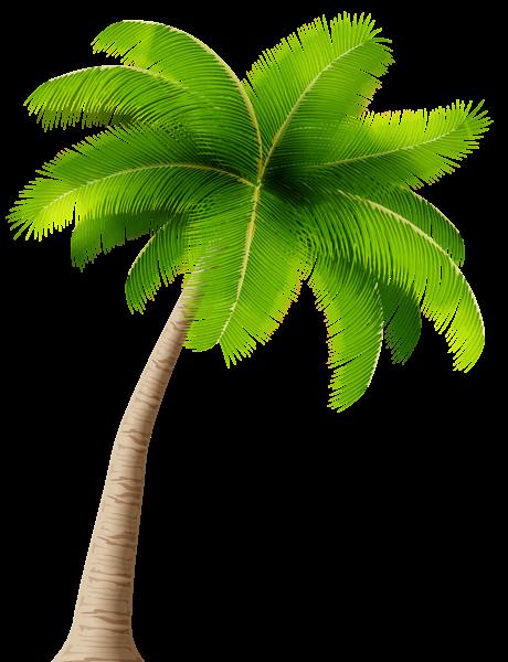 Book palm tree clipart jpg library stock Pin by Pankaj kushwaha on Palms | Palm tree clip art, Palm tree ... jpg library stock
