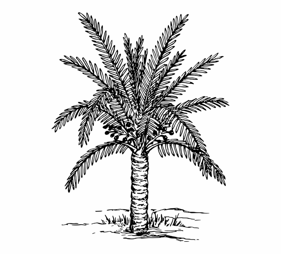 Book palm tree clipart picture royalty free library Palm Trees Coloring Book Drawing Painting Plants - Date Palm Tree ... picture royalty free library