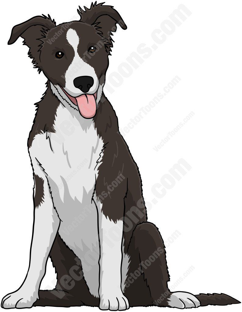 Border collies clipart svg sketch of border collie | Black And White Border Collie Puppy ... svg