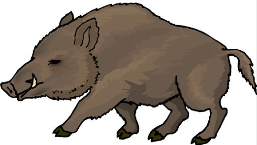 Hog clipart png Free Wild Boar Clipart, Download Free Clip Art, Free Clip Art on ... png