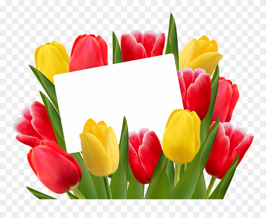 Bouqet of yellow tulips png clipart vector free picture freeuse Red And Yellow Tulips Png Clipart (#23044) - PinClipart picture freeuse