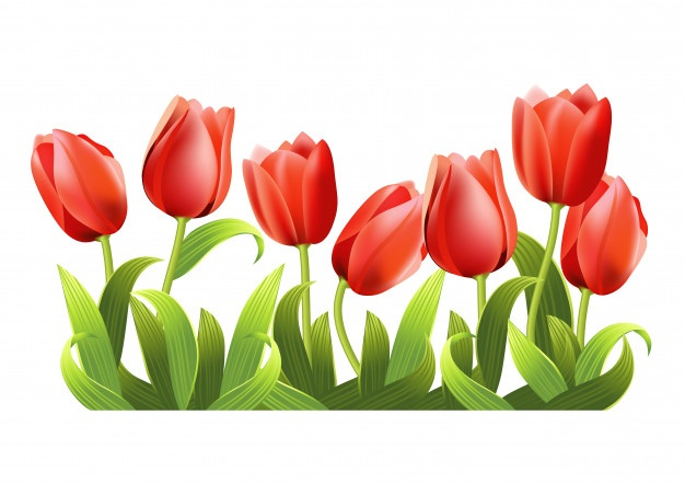 Bouqet of yellow tulips png clipart vector free jpg free Tulip Vectors, Photos and PSD files | Free Download jpg free