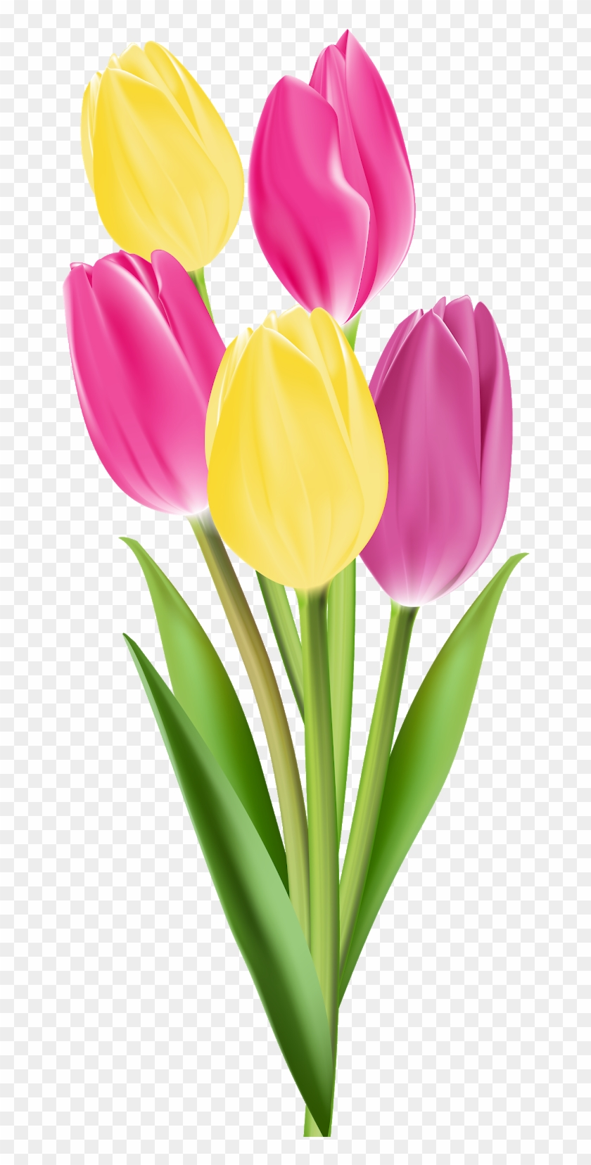 Bouqet of yellow tulips png clipart vector free picture transparent download Tulip Flower Bouquet Clip Art - Single Flowers Png, Transparent Png ... picture transparent download