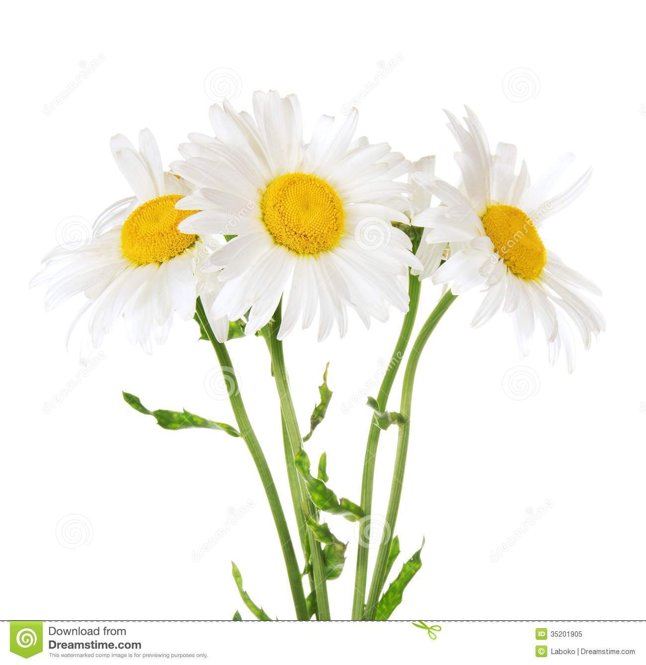 Bouquet of daisies clipart picture royalty free library Daisy bouquet clipart » Clipart Portal picture royalty free library