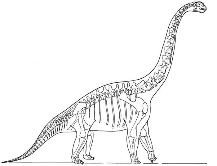 Brachiosaurus skeleton silhouette clipart clip transparent stock This picture shows a reconstruction of a Brachiosaurus skeleton ... clip transparent stock