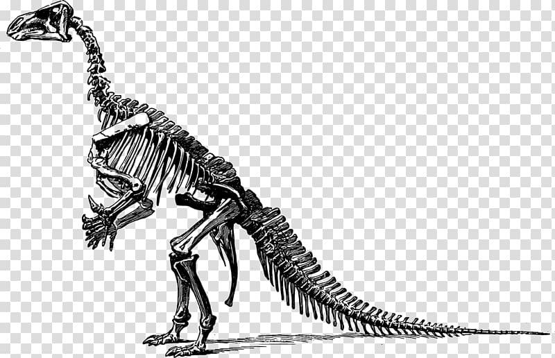 Brachiosaurus skeleton silhouette clipart svg freeuse Stegosaurus Apatosaurus Iguanodon Brontosaurus Brachiosaurus ... svg freeuse