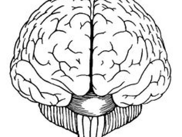 Brain as sponge clipart svg library library Free Drawn Brain, Download Free Clip Art on Owips.com svg library library