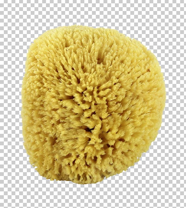 Brain as sponge clipart picture free stock Sponge Bathing Luffa Spa Human Body PNG, Clipart, Bathing, Bathtub ... picture free stock