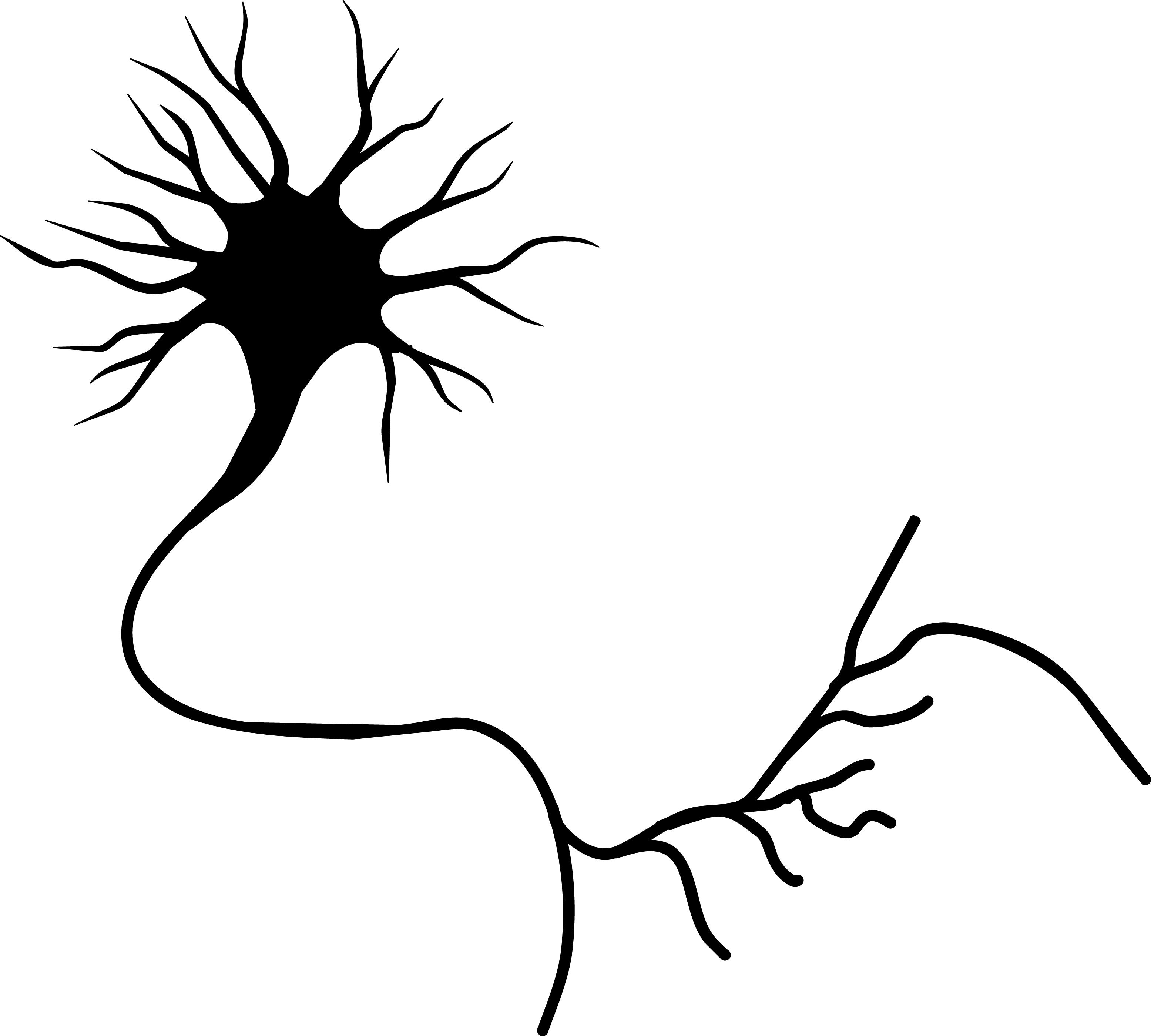 Brain cell clipart png freeuse library Neuron 20clipart | Clipart Panda - Free Clipart Images | nhc imagery ... png freeuse library