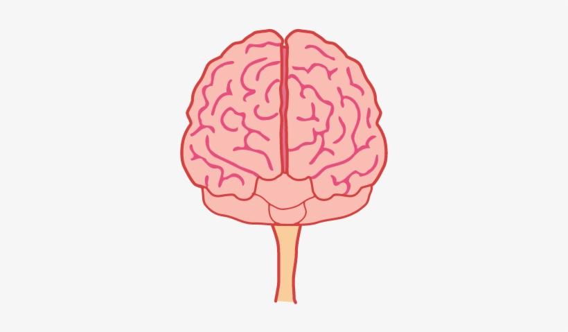 Brain front view clipart