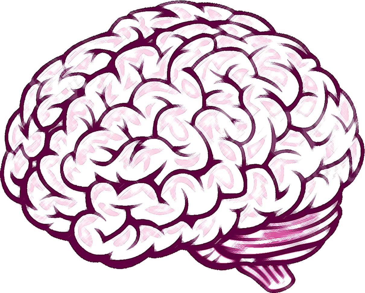 Brain front view clipart jpg Free Brain Drawing Cliparts, Download Free Clip Art, Free Clip Art ... jpg