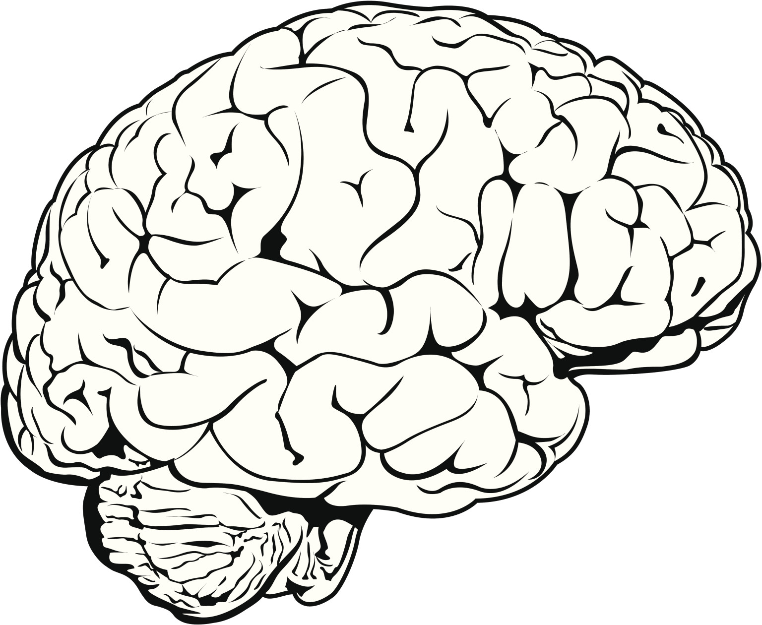 Brain frontal view clipart black and white banner black and white stock Free Brain Drawing Cliparts, Download Free Clip Art, Free Clip Art ... banner black and white stock